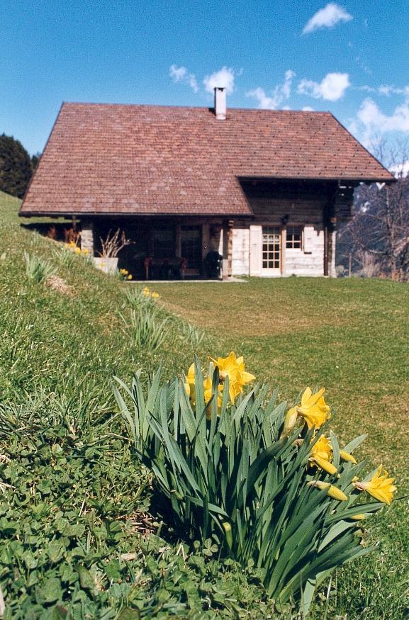 Photo du chalet de vacances l'Anta Rousa à Champéry au printemps avec jonquilles